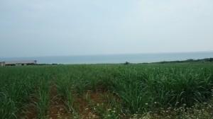 r1 小浜とうきび